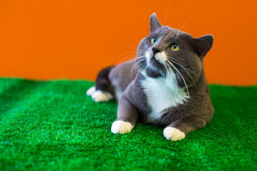 casey s happy tail   winnipeg pet rescue shelter