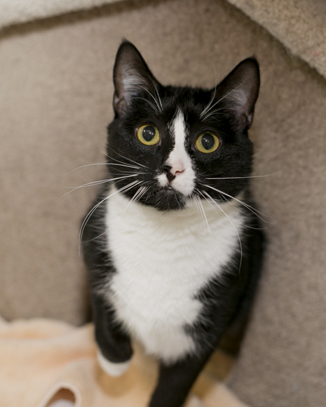 adoption fees   winnipeg pet rescue shelter