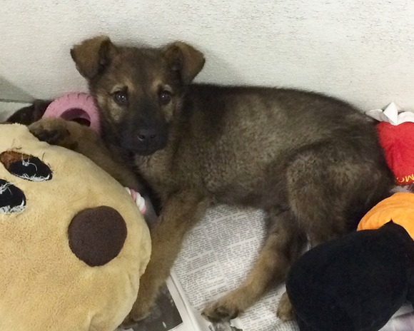puppies amp young dogs   winnipeg pet rescue shelter