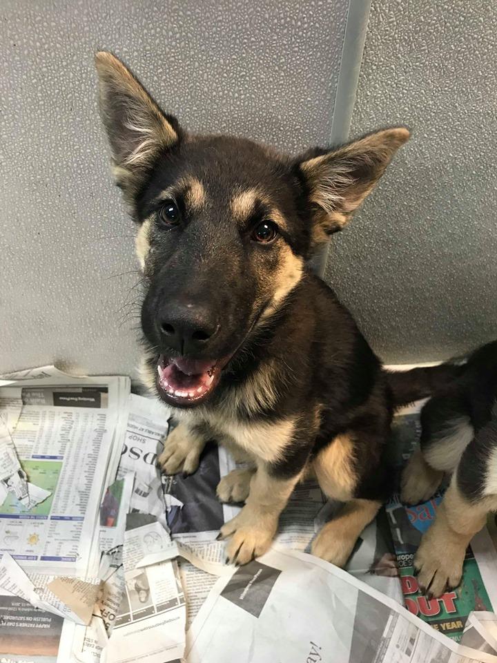 Home - Winnipeg Pet Rescue Shelter